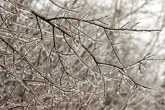 'An added burden ... ' (Canadapt) Tags: ice storm branches tree outline dangerous keefer canadapt