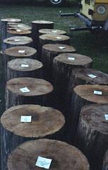 Sheffield Lumberjacks (rentavet) Tags: sheffieldpa sheffieldjohnnyappleseedfestival nikkormatel kodakhawkeyesurveillancefilm analog