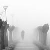 20161228_nva_5986_mist_europapark-web (nicolevanas) Tags: alphenaandenrijn fog koude landschap landschape mist mistig nicolevanasfotografie stedelijklandschap winter
