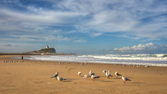 Nobby's in Winter (Marsjan) Tags: beach birds newcastle gulls australia nobbyshead newcastlensw