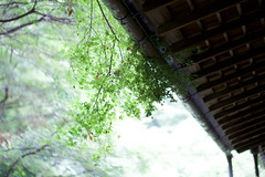 Eisho-ji (AILINK) Tags: shop temple nice kamakura culture zen 日本 wabisabi kanagawa 寺 archtecture 鎌倉 文化 和風 英勝寺 eishoji 尼寺