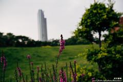 坐落平凡 (Tacolaire) Tags: 台灣 風景 生活 小品 攝影