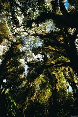Deep forest (Jeffrey Zamora) Tags: forest nikon costarica bosque heredia barva jeffreyzamora