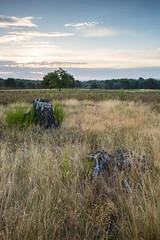 Mehlinger Heide, August 2015-0004 (Holger Losekann) Tags: sunrise sonnenaufgang pfalz mehlingerheide