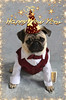 Pug Happy New Year (DaPuglet) Tags: pug puppy dog pets animals newyear happynewyear celebrate party celebration festive 2017 dogs costume tux formal hat champagne new year eve pugs pet tuxedo bowtie