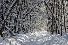 Snowy Trails (A.Joseph Images) Tags: winter snow snowtrails d7200 nikkor70200f28 landscape hiver