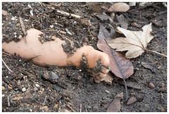 Ein grausiger Fund ... (ustrassmann) Tags: puppe bein dreck blätter grausig fund