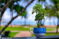 Happy Green World (MNmagic) Tags: sony a7rii zeiss 5518 thailand green trip flickrfriday sonycameraclub plant