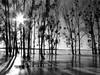 """ Eislandschaft "" ( Ice landscape ) (Black-Powder) Tags: monochrom schwarzweiss eis canon water wald sonne sun winter landscape landschaft"