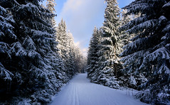 Langlauf (clé manuel) Tags: wood woods forest winter snow schnee skiing crosscountry langlauf pines trees nature natur tannen wald fichtelgebirge ochsenkopf sonyalpha loipe sunshine sun