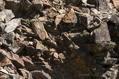"""American Pika • <a style=""""font-size:0.8em;"""" href=""""http://www.flickr.com/photos/63501323@N07/31639002170/"""" target=""""_blank"""">View on Flickr</a>"""
