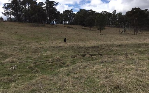 Lot 551 Blue Hills Road, Glen Innes NSW 2370