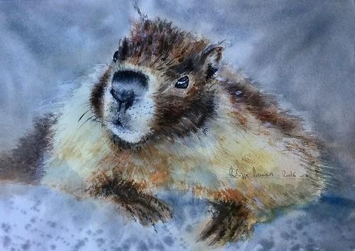 La marmotte du Tourmalet