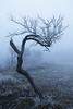 Solitude et déformation (le Rat et l'Ours) Tags: brume mist brouillard fog frosted tree frost givre arbre winter hiver white blue lost seul twisted tordu field champ outside extérieur