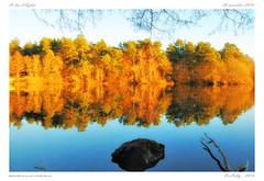 Le lac d'Aydat [Puy de Dôme] (BerColly) Tags: france auvergne puydedome aydat lake automne autumn reflet reflection ciel sky azur arbres trees couleurs colors lumière light eau water bercolly google flickr
