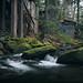Daisy Town (ALP Images) Tags: elkmont gsmnp greatsmokeymountainnationalpark jakescreek stream water huoses cabins gloomy fujixt1
