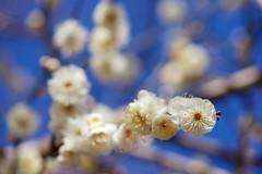 DSC08752 (@saka) Tags: autoupload leaves 599602 flowers 43324338 trees 52 street 4751