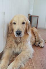 Dog Heart (francesbean) Tags: tokyo japan travel2016 frdd yoyogi yoyogikoen dog dogs dogcafe harajuku