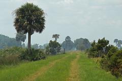 smoky peavine (the feral man) Tags: nature natural florida dryprairie kissimmeeprairie staeparks kissimmeeprairiepreservestatepark