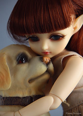 Sweet Puppy (Ebony Dragon) Tags: dog fauna puppy golden doll cookie retriever elf bjd hybrid fairyland ciaobella anotherspace bambicrony littlefee