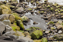 Zoltan Papdi 2015-0410 (Zoltan Silvester Papdi) Tags: travel mountain color green nature water ecology horizontal landscape volcano living waterfall iceland peace zen volcanic islande ecotourism