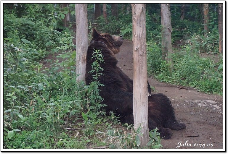 熊牧場 (5)