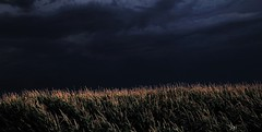 Slightly fooled around with corn picture  IMG_8297 2 (michellesilva162) Tags: