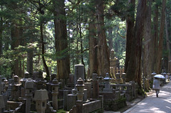 Oku-no-in in Koya-San full of pine trees