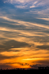 Birds flying high you know how I feel (Chris B70D) Tags: birds flying high winter sun rise sunrise december 8am silhouette clouds light colour blue orange black treeline trees fife dundee broughty ferry 3rd floor view 18135 zoom canon 70d scotland landscape scenery timing