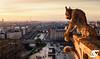 Le diable veille (A.G. Photographe) Tags: anto antoxiii xiii ag agphotographe paris parisien parisian france french français europe capitale d810 nikon nikkor 2470 notredame chimère gargouille diable devil goldenhour toureiffel eiffeltower seine bateauxmouches