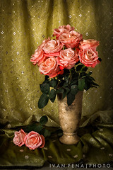 I Can't Stop Thinking About You (ivanpenaphoto) Tags: fineart artbyivan flowers stilllife pink ivanpenaphoto ivanpena ivanpenaphotoaolcom fineartbyivan canon ivanpeña roses