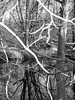 Ramapo Reservation (tchamber236) Tags: countypark ecology ecosystem environment environmentalism forest land nature park river scenery seasons water winter wintertime mahwah nj unitedstates usa