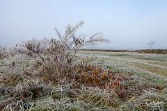 deep winter (Tiziano Photography) Tags: winter hoarfrost bush fog nikond610 d610 nikon landscape inverno galaverna cespuglio nebbia