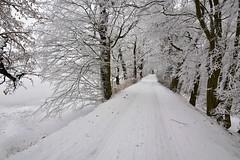 D71_0033A (vkalivoda) Tags: cesta zima winter krajina landscape snow tree road countryroad venkov stromořadí jedovnice budkovan outdoor snowbank