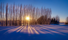 Another sunny day! (Explored) (VanveenJF) Tags: snow tree shadows winter cold sun fence fujifilm xt10 alberta stalbert canon wideangle 28mm fd lens kf concept