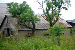 Barn (~ Lone Wadi ~) Tags: barn farm rural abandoned abandonment derelict caldwellcounty kentucky neglected overgrown bluegrassstate