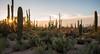 Saguaro National Park, AZ (imageseekertoo (Wendy Elliott)) Tags: arizona saguaronationalpark tucson usnationalparks desert nationalpark saguarocactus sonorandesert wendyelliott wendyelliottphotography wintertrip2016to2017