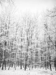 P1180001-1.jpg (loenatik) Tags: assel gelderland kootwijk nature nederland radiokootwijk sneeuw snow tree winter sky