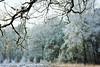 winters-bos (Don Pedro de Carrion de los Condes !) Tags: donpedro d700 nijkerk heide bos klompenpad rijp vorst koude kristallen winter winters kruishaar zonlicht wintry bomen aanvriezing