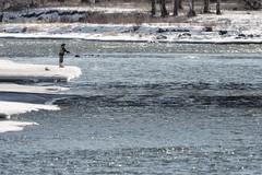 01200325b Fly fishing (geelog) Tags: alberta calgary fishcreekpark bowriver flyfishing january sunny