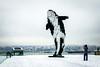 Orca on the Snow (Ann Hung Photography) Tags: digitalorca vancouver douglascoupland snow vancouverconventioncentre panasonicdmczs100