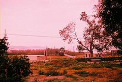 F1030008_lr (chi.ilpleut) Tags: kinmen taiwan island quemoy 2017 chinesenewyear lunar film expiredfilm kodakelitechrome100 iso100 crossprocessing 135mm 35mm analogue ilovefilms kodakfilm 底片 過期底片 柯達 記憶 蹤跡 金門鎏金之島kinmen 台灣 海島 島嶼 外島 回憶 走春 大晴天拍照天 晃晃 隨拍 我愛海 我愛草 我不在,就在去海邊的路上 海景 outing 冬陽 暖暖 暖陽 思念 漫步