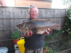 "Phil Marshall with his record boat out of area Ballan Wrasse which weighed in at just over 7lbs • <a style=""font-size:0.8em;"" href=""http://www.flickr.com/photos/113772263@N05/17953845774/"" target=""_blank"">View on Flickr</a>"