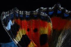 Mosaic (Wisdom Through Inspiration) Tags: macro blackbackground butterfly insect mosaic win