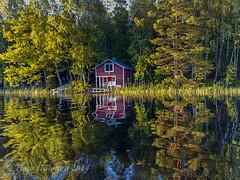 Lake Vehkajrvi (Timo Halonen) Tags: reflection water finland nokia cottage vehkajrvi kasiniemi vesi kesmkki heijastus n95 hme padasjoki carlzeisslens
