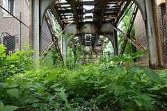 urbs in horto (KevinIrvineChi) Tags: above railroad light urban chicago green leaves train photography photo leaf rust cta under tracks rusty photograph greenery lush ravenswood bowmanville chicagoist ctabrownline
