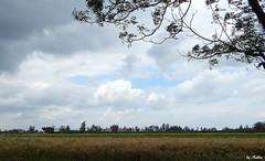 CLOUDS OVER WHEAT FIELDS (Nadia Rifaat) Tags: blue sky cloud tree green nature field grass yellow landscape nikon outdoor wheat egypt delta nile coolpix مصر سماء طبيعة سحب شجر menoufia القمح المنوفية l830 حقول