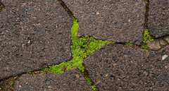 IMG_5769 (francois f swanepoel) Tags: winter green wet rain moss capetown westerncape voc weskaap dutcheastindiacompany companysgarden vereenigdeoostindischecompagnie kompanjiestuin