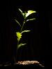 _NIK0378 (nikdanna) Tags: sun leaves sunshine foglie oak sole interno7 quercia nikdanna
