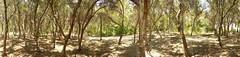 olive trees (TbocII) Tags: park athens greece hdr attica αθήνα πάρκο aigaleo αττική αιγάλεω μπαρουτάδικο άλσοσ baroutadiko